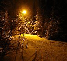 The Woods at Night by Shauna  Kosoris