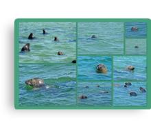 Gray Seals at Chatham - Cape Cod Canvas Print