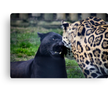 Feline affection Canvas Print