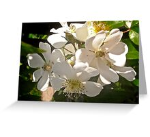 Wild white roses tee, i-phone case, i-pad case, pillow and tote Greeting Card