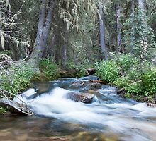 Cony Creek Flowing by Shea Oliver