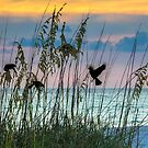 Foraging at Sunset by Mikell Herrick
