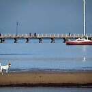 Beach Dog by Natalie Ord