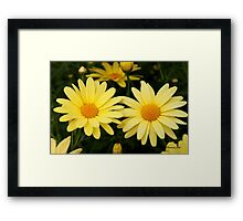 Just Call Them Mellow Yellow ~ Daisies Framed Print