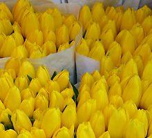 Dutch tulips in Ljubeljana - Slovenia by Arie Koene