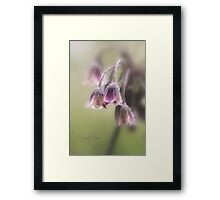 Honey Lily Framed Print