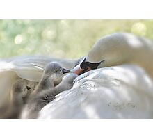 A tender moment Photographic Print