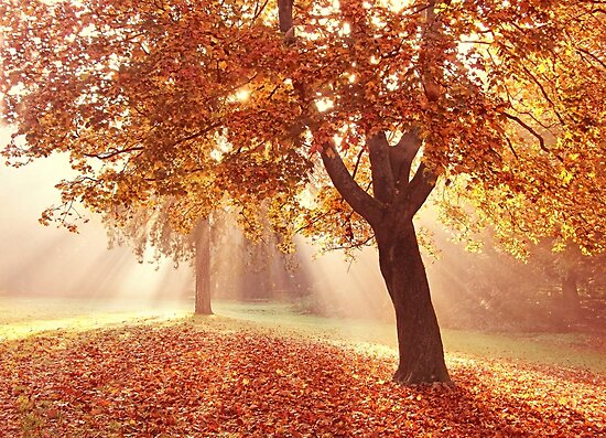 Autumn dreams by Lyn Evans