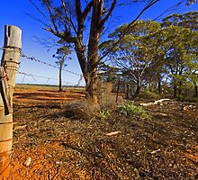 Along the Emu Fence Road by threewisefrogs