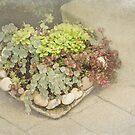 Garden Heart, Garden Soul by Marilyn Cornwell