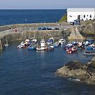Coverack harbour by Steve plowman