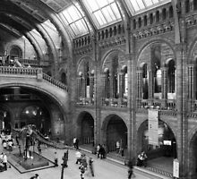 Inside the Natural History Museum by TomGreenPhotos