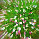 Daisy blast by Kerry  Hill