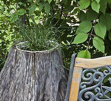 Kinky Grass - Tree Planter  by Sandra Foster