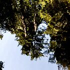 Reflected Trees by Marylou Badeaux