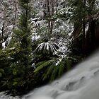 Snow at Cora Linn Falls by Donovan wilson