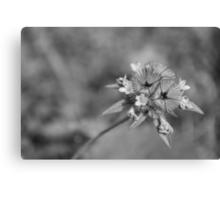 black en white flower Canvas Print