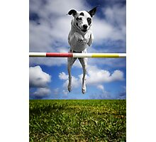 Zelda, RHOA, RHEXAJ: From Rescued Dog To Agility Champion Photographic Print