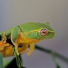 The dainty green tree frog  by Normf
