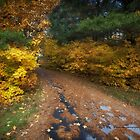 Lakeside Path in Autumn by Yannik Hay