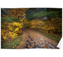 Lakeside Path in Autumn Poster