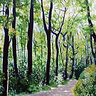 'Tall Trees Along the Moses Cone Trail' by Jerry Kirk