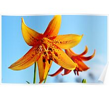 American Tiger Lily Poster