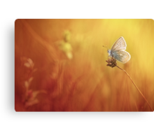 Catching a little sunshine... Canvas Print