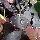 Refreshing rain by Heather Thorsen