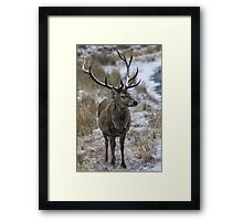 Twelve Point Stag in the Snow Framed Print