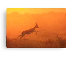 Springbok - Jumping for Gold - African Wildlife Canvas Print