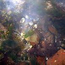 Rock Pool by mikebov