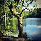 Tree by the Lake by inesbot