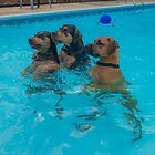 Three Frogs in the Pool by matt1960