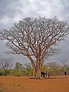 """The """"listening"""" tree, Namibia, Africa by Margaret  Hyde"""