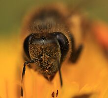 Giving you the hairy eyeball by Graeme M