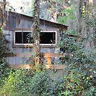 Alpine Groves Park - St. Johns County, FL by Caren