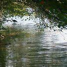 Summer afternoon fishing by nealbarnett