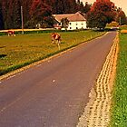 Country road on summer morning | landscape photography by Patrick Jobst