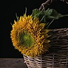Sunflower in a basket by Edward Fielding
