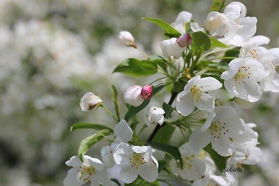 Blossom Time by Rosemary Sobiera