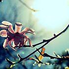 Solitude by Evita