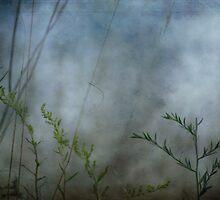 wild grasses 11 by vigor