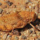 Outback Grasshopper by Penny Smith