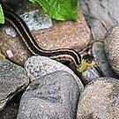 Eastern Garter Snake by Sharon Woerner