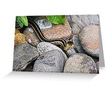 Eastern Garter Snake Greeting Card