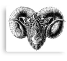 Ram Head Canvas Print