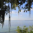 View of the Intracoastal Waterway by Caren
