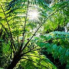 Daintree Rainforest Fern by Silken Photography