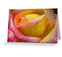 Morning in the rose garden Greeting Card